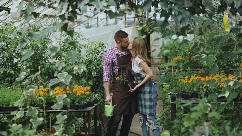 Den lyckliga unga blomsterhandlarefamiljen i förkläde har gyckel under att arbeta i växthus Den attraktiva manomfamningen och kys arkivfoto