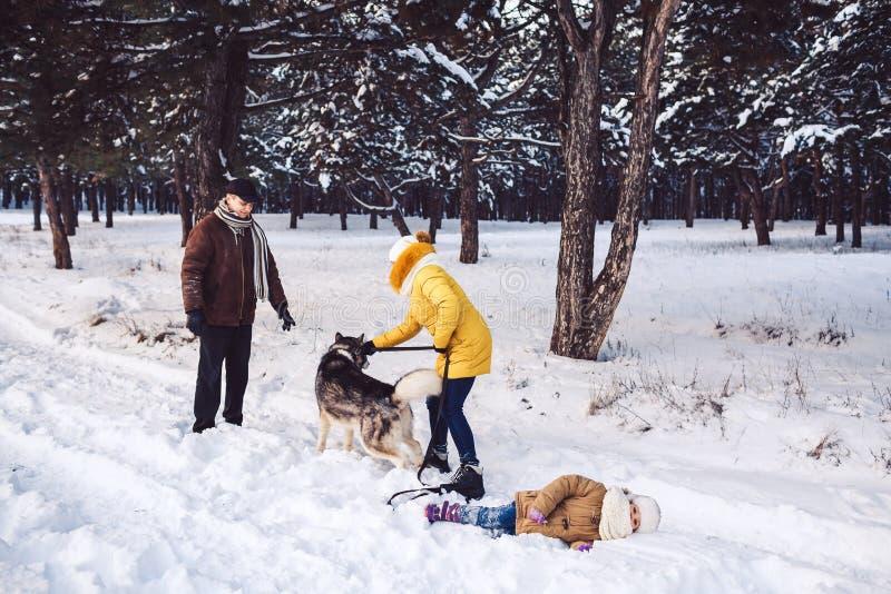 Den lyckliga unga familjen som har gyckel som spelar med hunden i vinter, parkerar Lilla flickan ligger i snön royaltyfria bilder