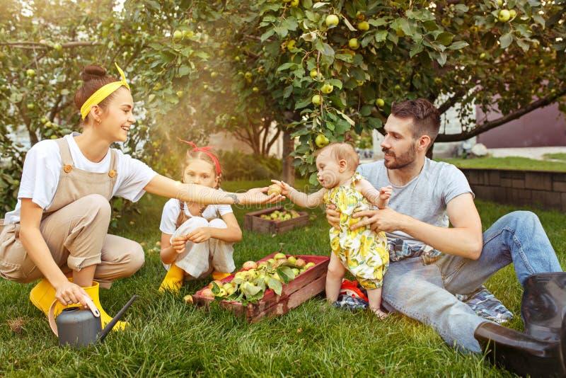 Den lyckliga unga familjen under plockningäpplen i ett trädgårds- utomhus arkivbild