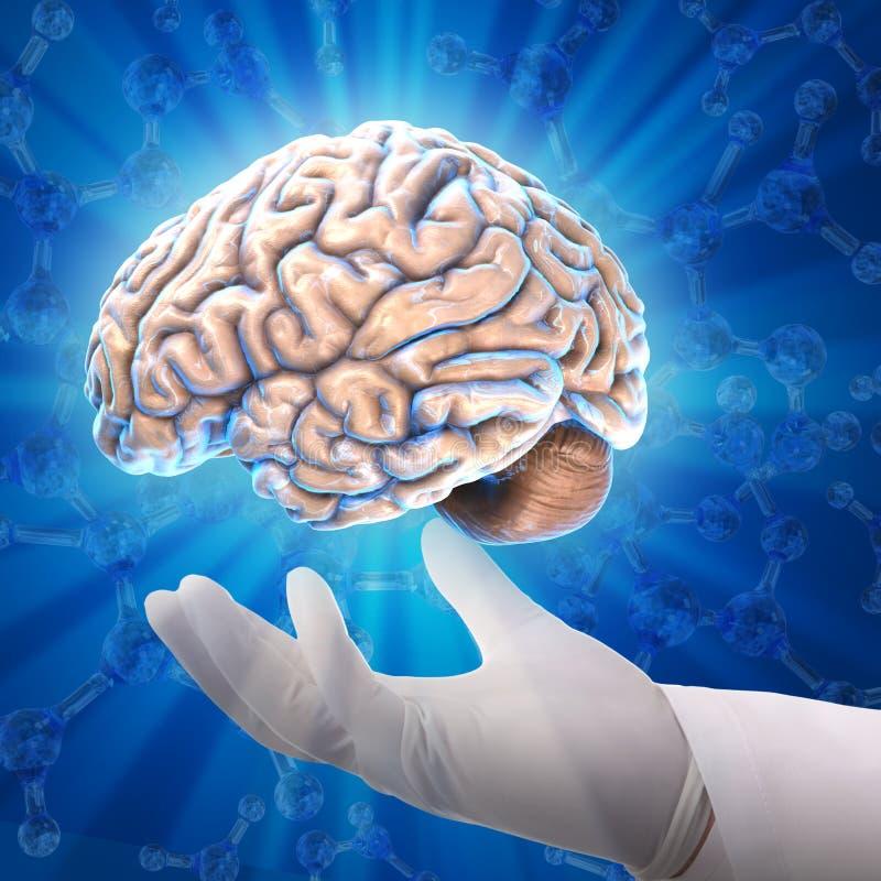 Den mänskliga hjärnan stock illustrationer