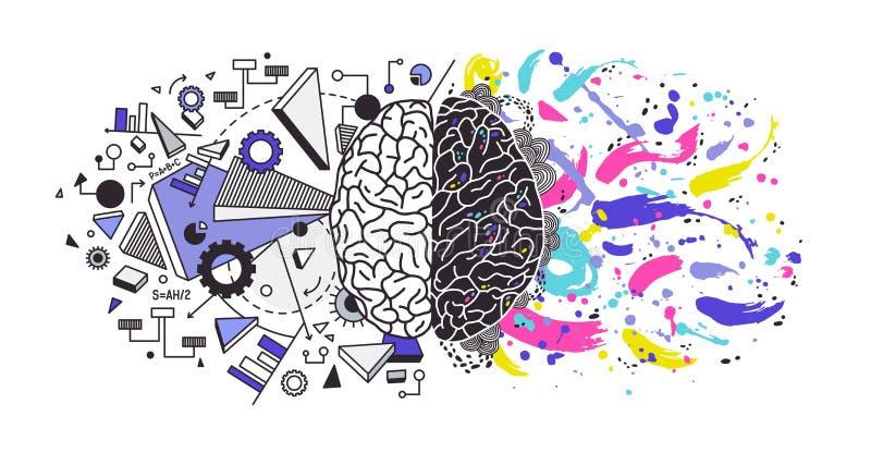 Den mänskliga hjärnan delade in i högra och vänstra cerebrala halvklot som var ansvariga för olika funktioner - kreativitet eller royaltyfri illustrationer