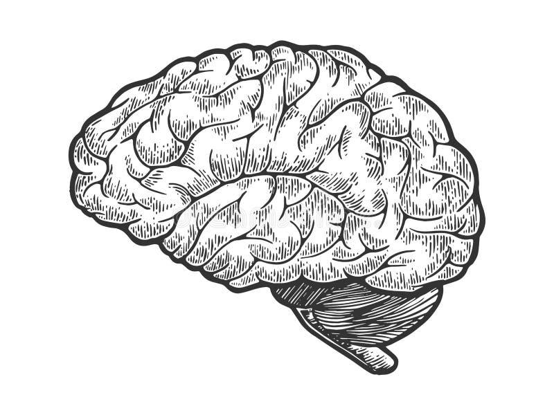 Den mänskliga hjärnan skissar gravyrvektorn stock illustrationer