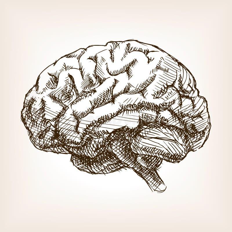Den mänskliga hjärnan skissar stilvektorillustrationen stock illustrationer
