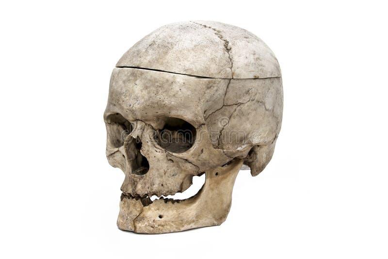 Den mänskliga skallen från den tre fjärdedelen arkivbilder