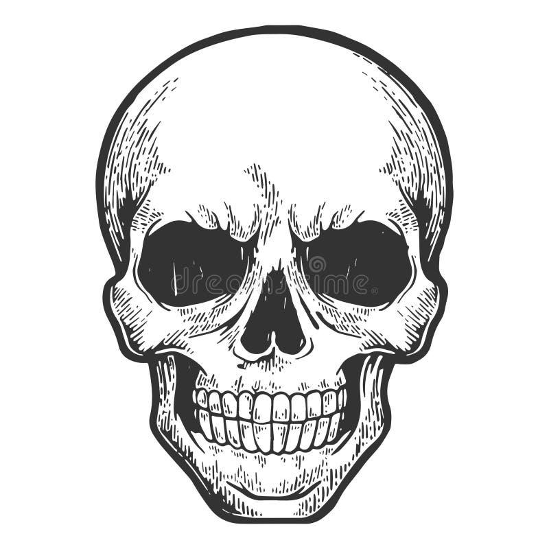 Den mänskliga skallen skissar gravyrvektorn royaltyfri illustrationer