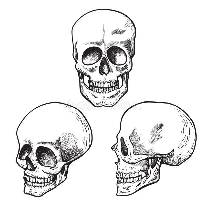 Den mänskliga skallen skissar uppsättningen, läkarundersökning och vetenskap vektor illustrationer