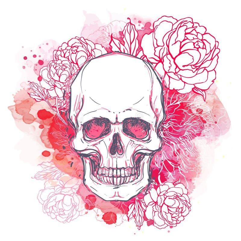 Den mänskligt skallen med pionen, rosa och vallmo blommar på vattenfärgbac stock illustrationer