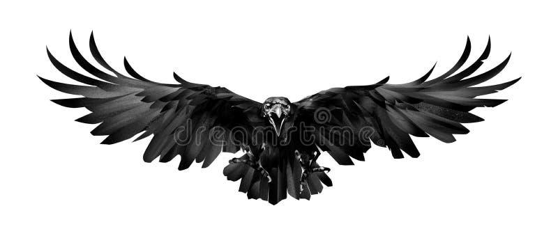 Den målade fågeln är ett korpsvart framme på en vit bakgrund stock illustrationer