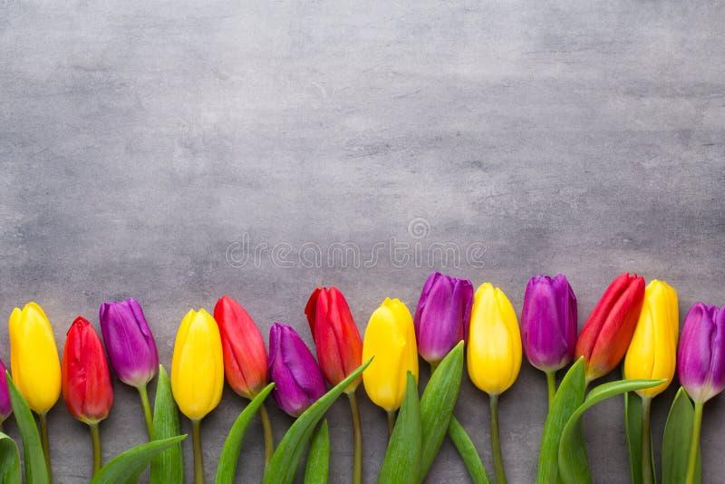 Den mångfärgade våren blommar, tulpan på en grå bakgrund royaltyfri fotografi