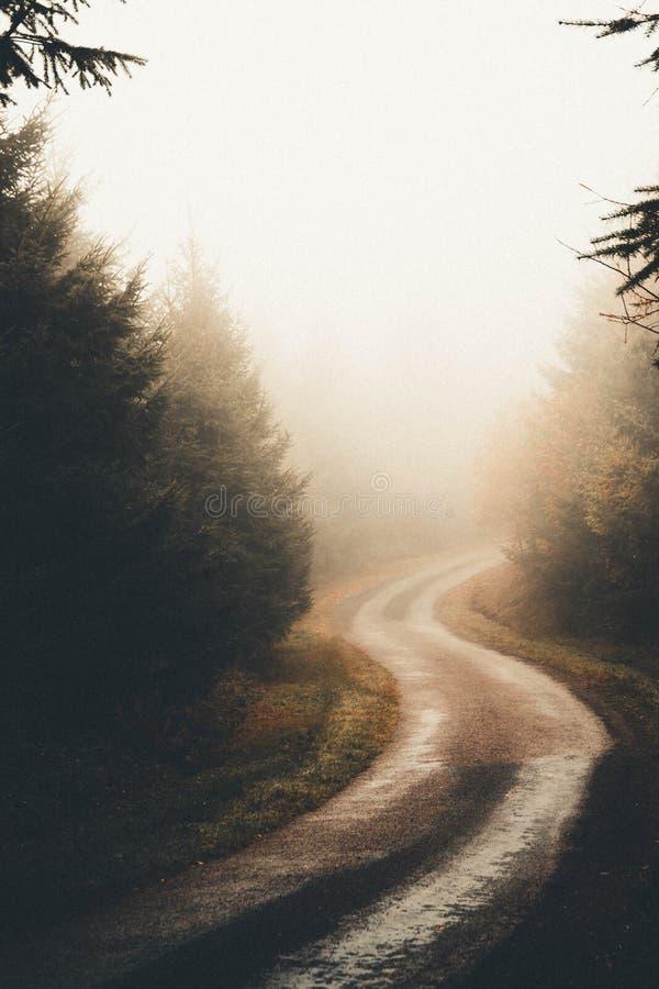Den mörka mystiska banan i en dimmig skog med sörjer träd royaltyfri bild