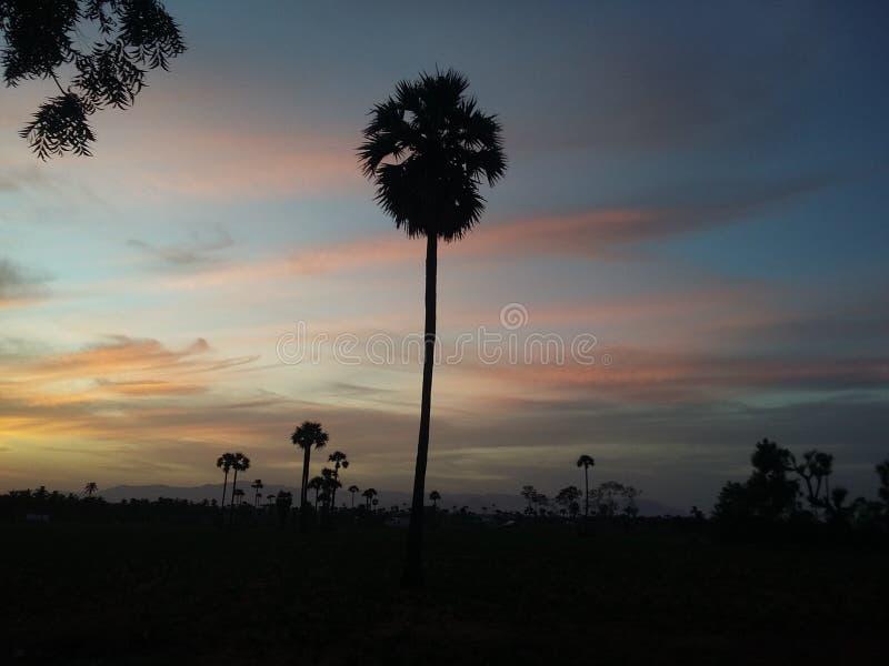Den mörka palmträdet royaltyfri bild