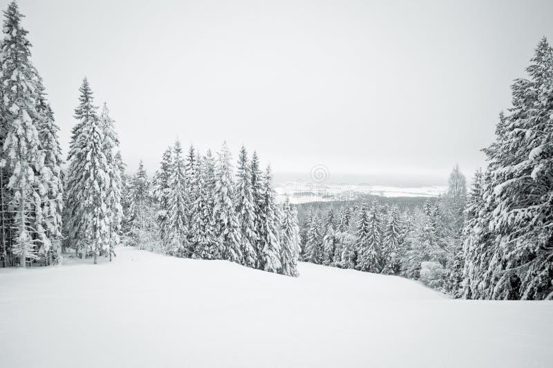 Den mörka vinterligganden med snow räknade trees royaltyfria bilder