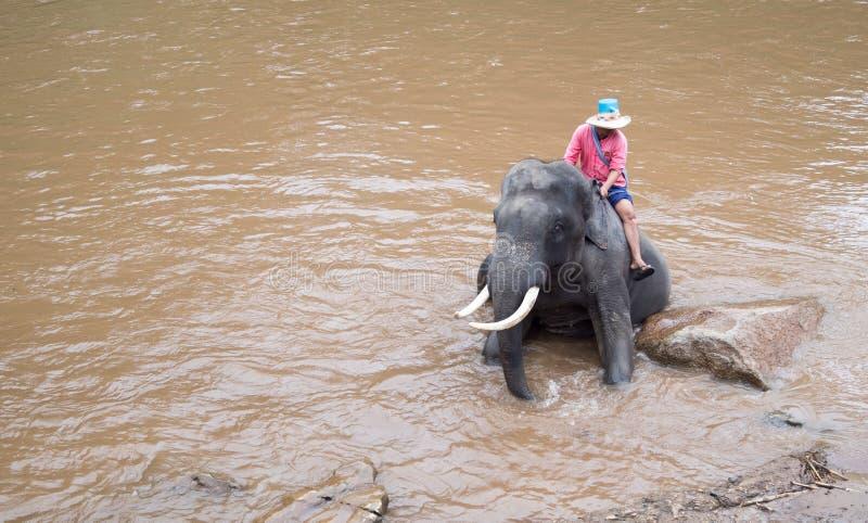 Den Maetaeng elefanten parkerar - badningelefanten i Mae Taeng Rive arkivfoton
