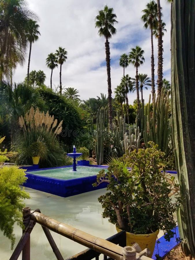Den Majorelle trädgården i Marrakesh Marocko fotografering för bildbyråer