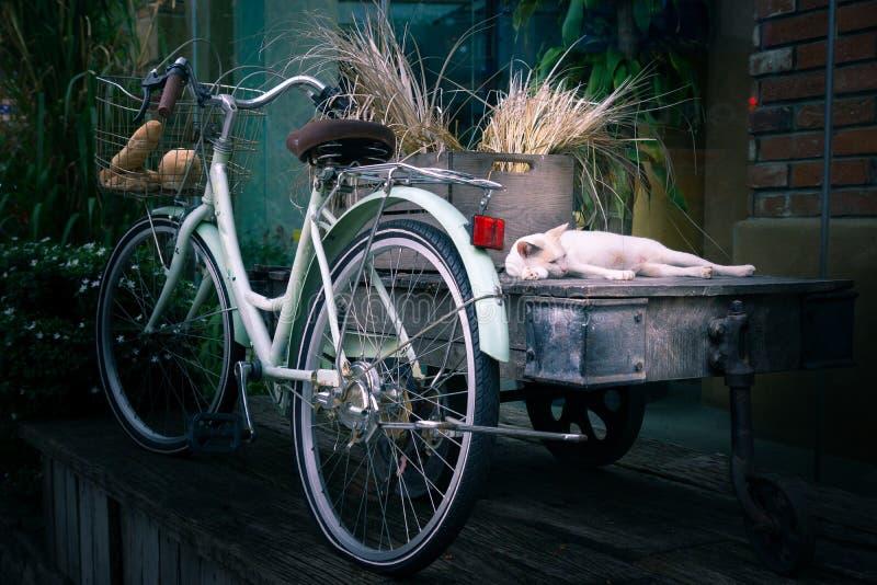Den malaysian katten och cykeln royaltyfria foton