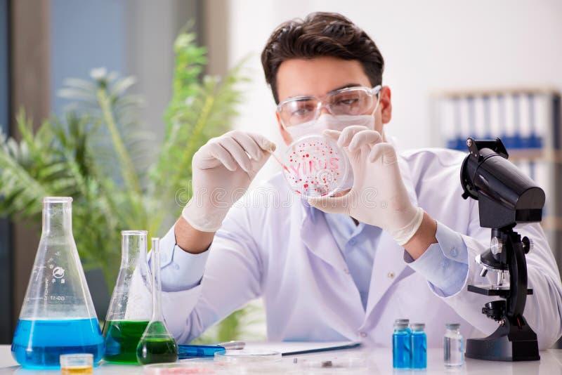 Den manliga doktorn som arbetar i labbet på virusvaccin royaltyfria foton