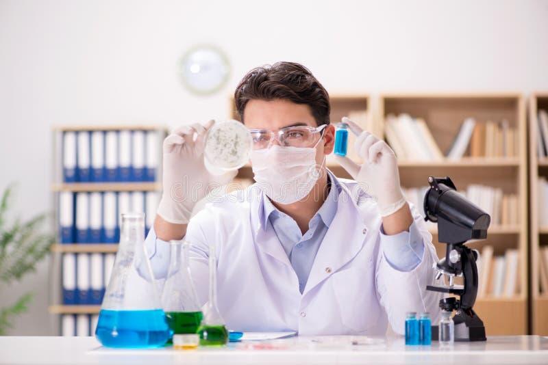 Den manliga doktorn som arbetar i labbet på virusvaccin arkivbilder