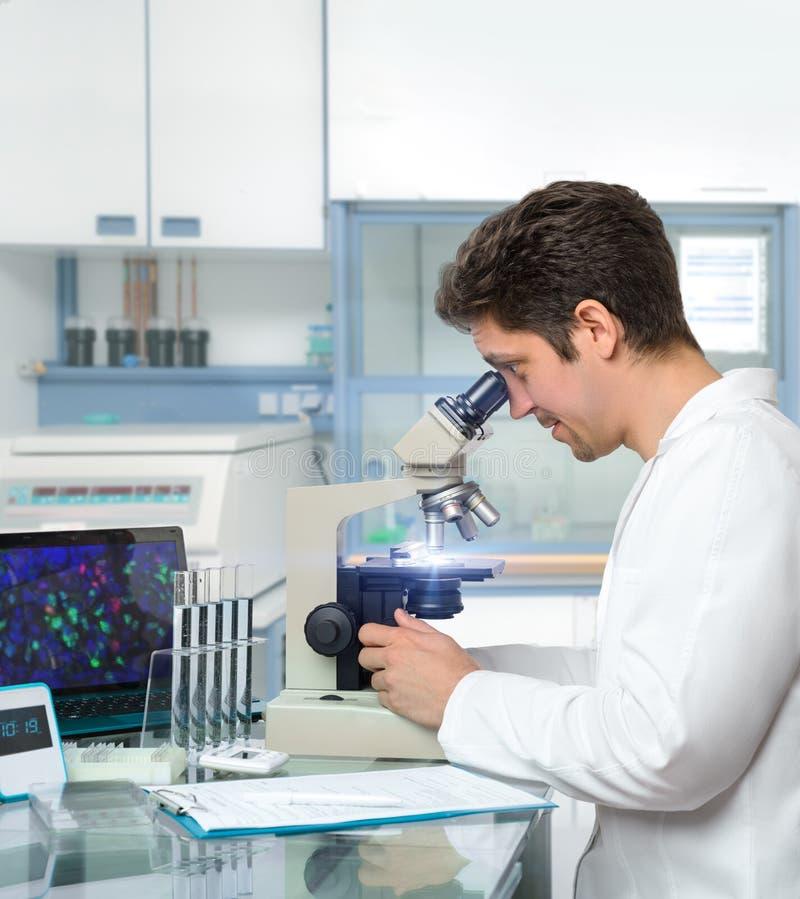 Den manliga forskaren eller tech arbetar med mikroskopet royaltyfri fotografi