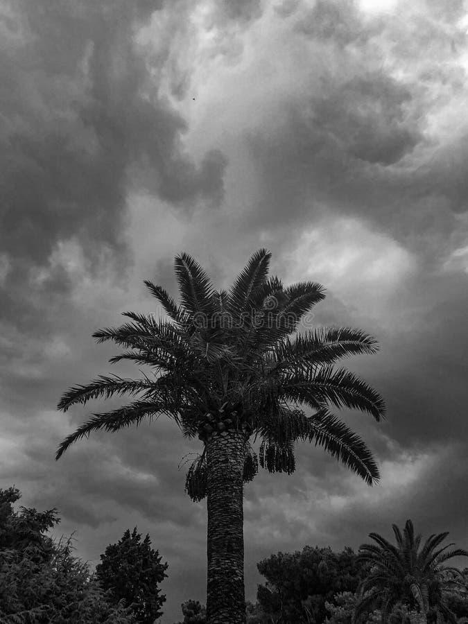den medelhavs- corsica ?n g?mma i handflatan den fotografi tagna treen arkivbilder