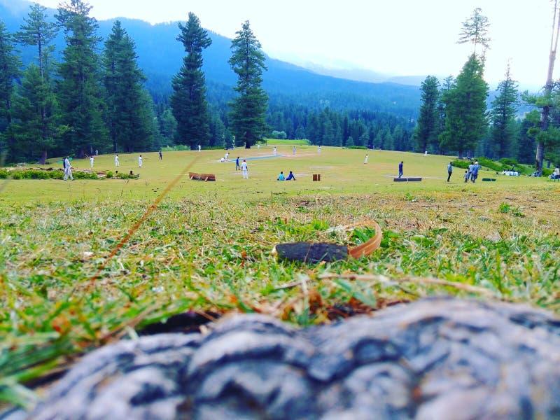 Den mest härliga syrsajordningen på jord är i Kashmir fotografering för bildbyråer