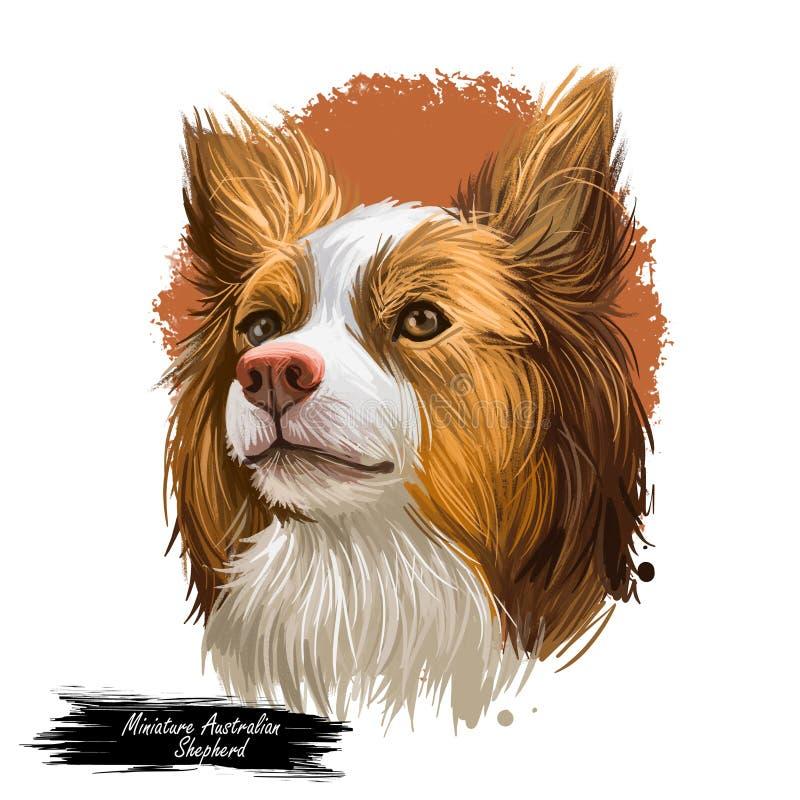 Den miniatyraustraliska herden, daltar påbörjat i USA digital konstillustration Samlas den funktionsdugliga materielhunden med lå vektor illustrationer