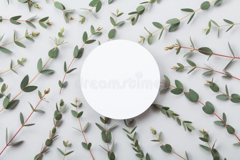 Den Minimalistic naturmodellen av det tomma runda kortet och eukalyptuns lämnar bästa sikt lekmanna- stil för lägenhet royaltyfria foton