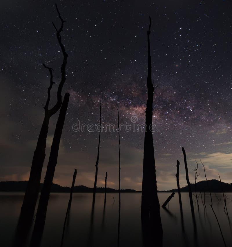 Den mjölkaktiga vägen och det döda trädet fotografering för bildbyråer