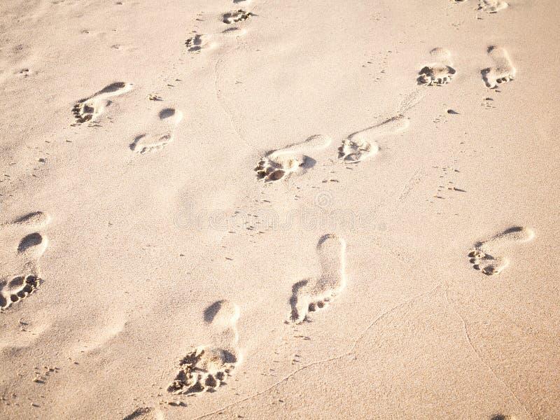 Den mjuka fokusen och signalen av fotspår på den tropiska stranden sandpapprar intelligens arkivbild
