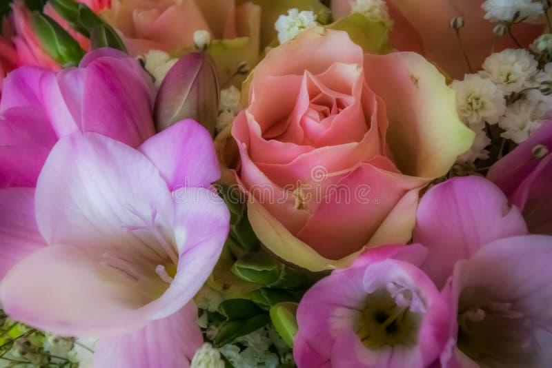 Den mjuka rosa färgen blommar bakgrund royaltyfria foton