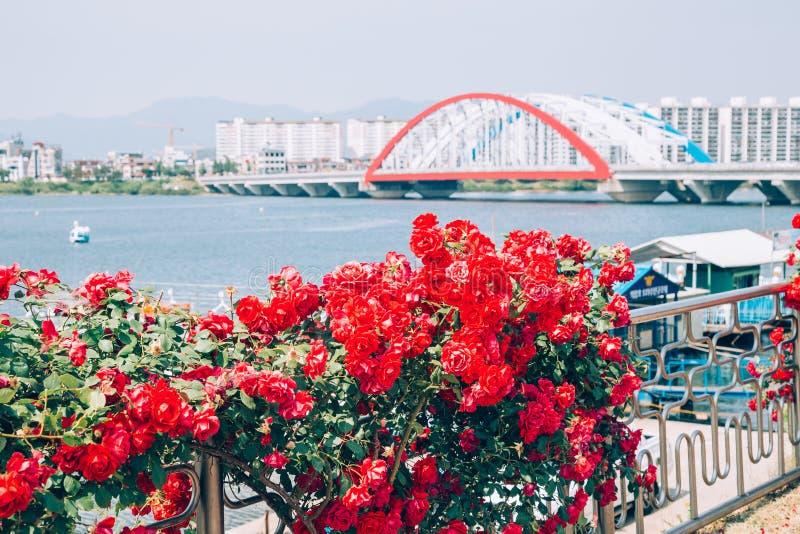 Den moderna bron och lägenheten med blomman på flodstranden parkerar i Korea royaltyfria bilder