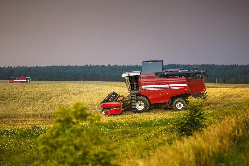 Den moderna tunga skördearbetaren tar bort det mogna vetebrödet i fält för stormen Säsongsbetonat jordbruks- arbete arkivbilder