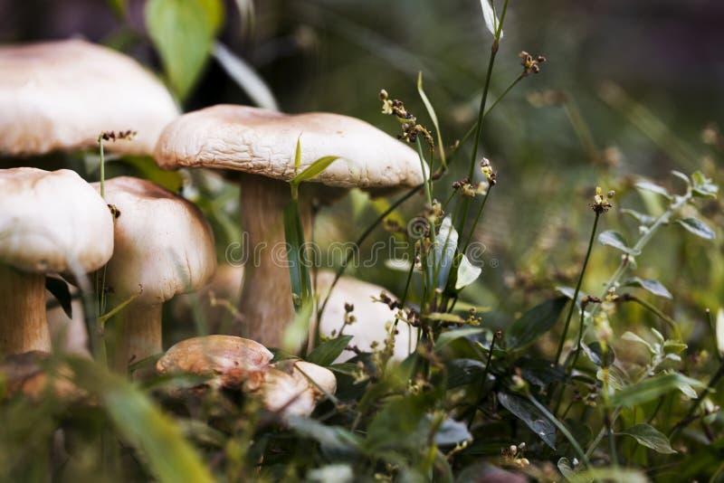 Den mogna champinjonen i tappning för grönt gräs tonade fotoet En lake i ett fridsamt trä royaltyfria bilder
