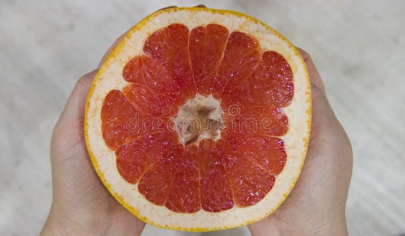 Den mogna klippta grapefrukten fotografering för bildbyråer