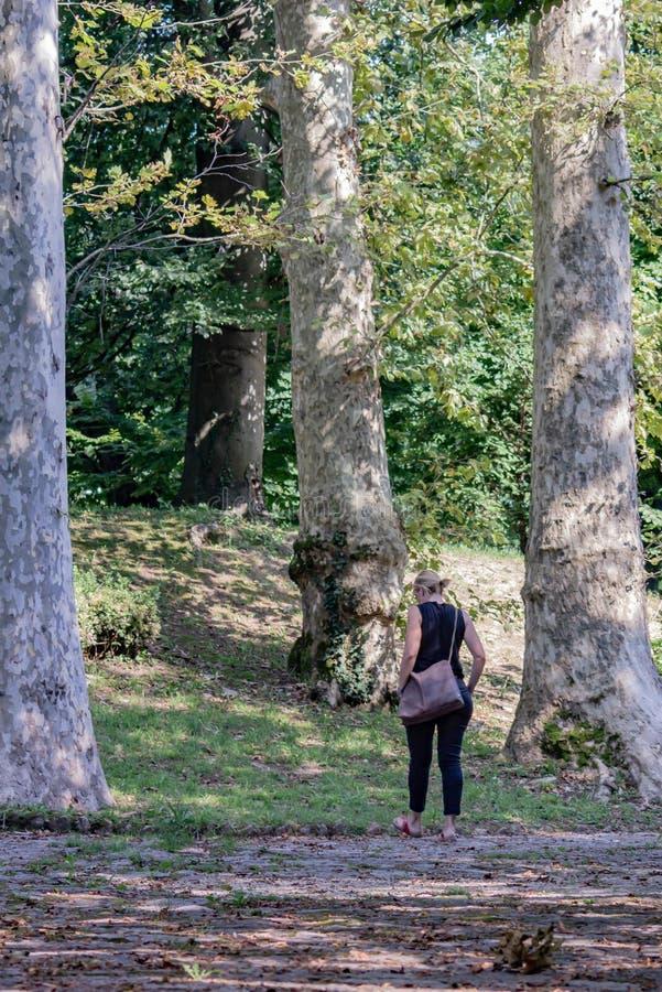 Den mogna kvinnan i parkerar att ta går bland högväxta träd som gör hennes blick mycket liten i jämförelse klädd blondin med expo royaltyfria bilder