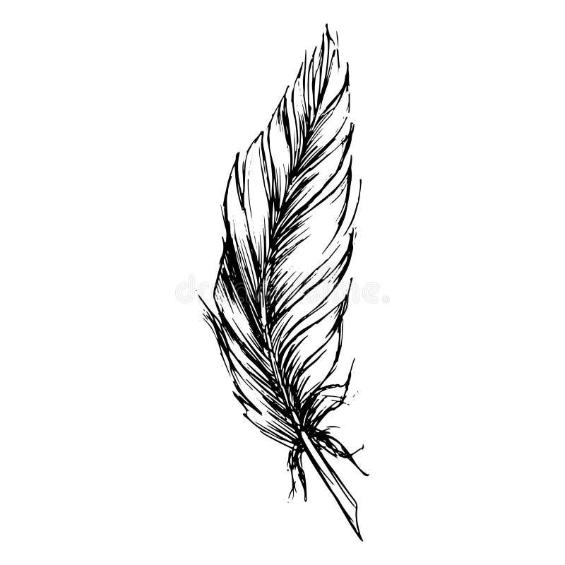 Den monokromma svartvita fågelfjädern skissade konst royaltyfri illustrationer