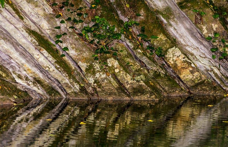 Den monolitiska väggen av vaggar dolt med mossa och murgrönan reflekterade i vattnet royaltyfri bild