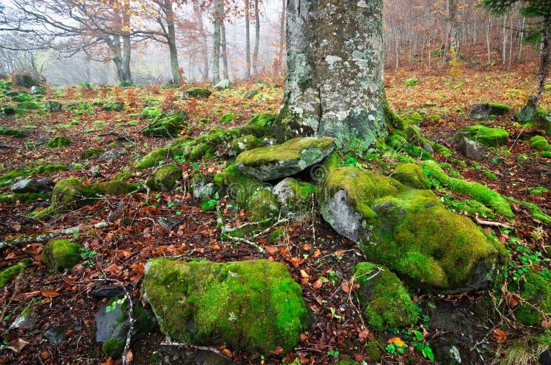 den mossy skogen rotar smutsar arkivbild