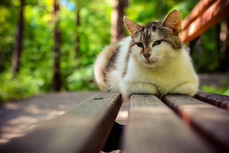 Den nära övre gatakatten på parkerar bänken Rolig katt med ögonen av en annan katt royaltyfri bild