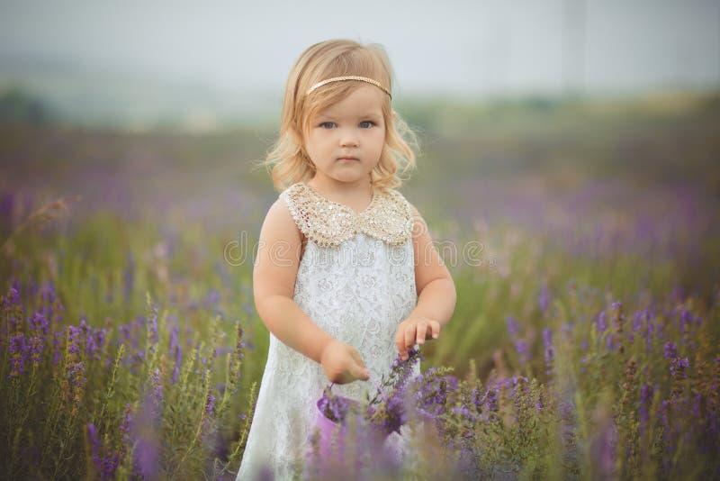 Den nätta gulliga lilla flickan bär den vita klänningen i ett lavendelfält som rymmer en korg full av purpurfärgade blommor royaltyfri bild