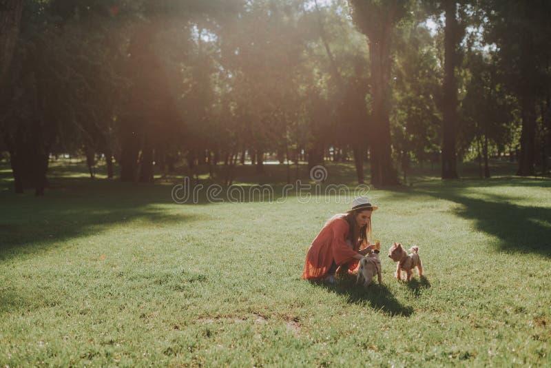 Den nätta kvinnan ger leksaken till hennes hund royaltyfri foto