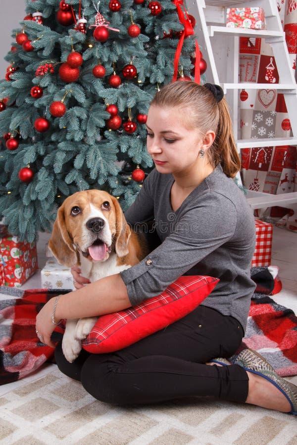Den nätta unga kvinnan med beaglehunden sitter nära dekorerat träd för nytt år royaltyfri foto
