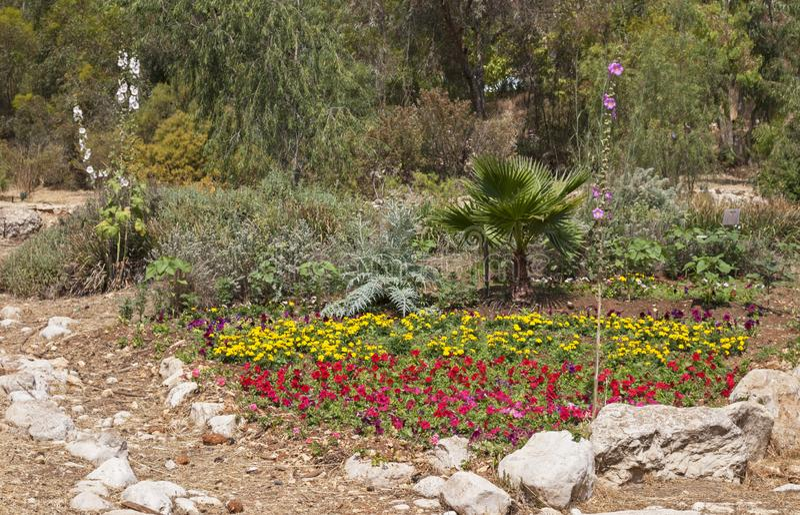 Den naturliga seende blommaträdgården med vaggar brytningar royaltyfri foto