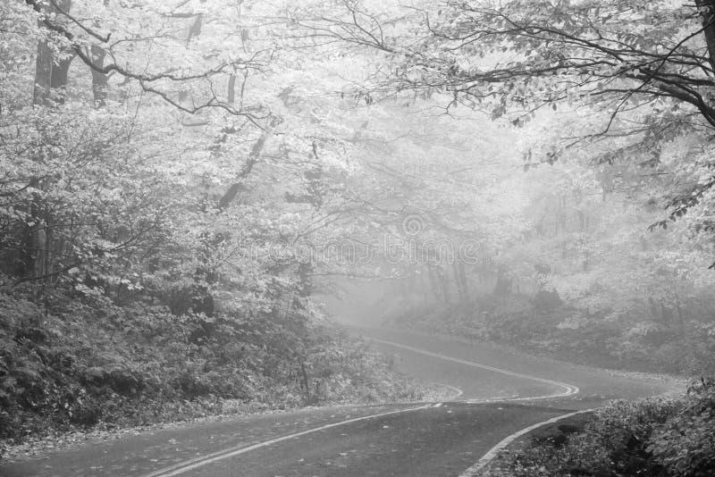 In den Nebel lizenzfreies stockbild