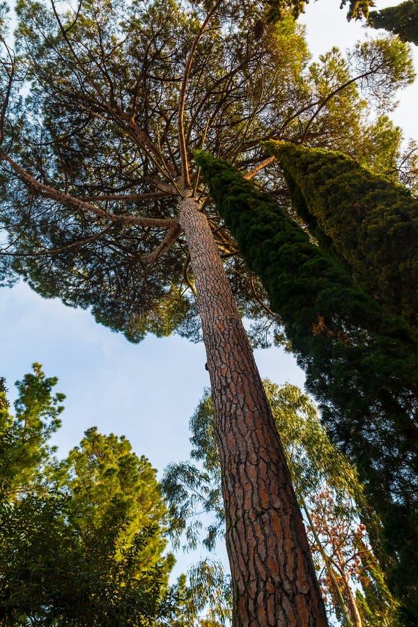Den nedersta sikten av sörjer trädet arkivfoto
