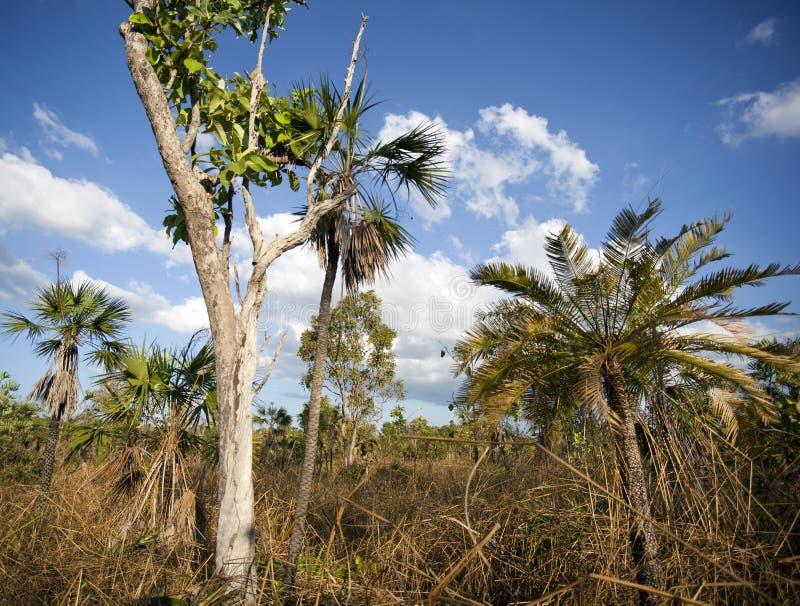 den nordliga busken skurar tropisk vegetation för territoriet arkivfoton
