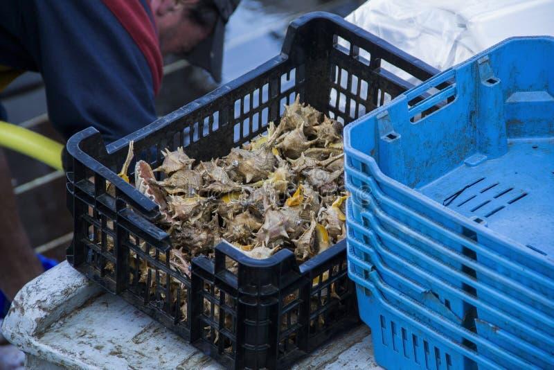 Den nya fisken och skaldjur i Cambrils härbärgerar, Tarragona, Spanien arkivfoto