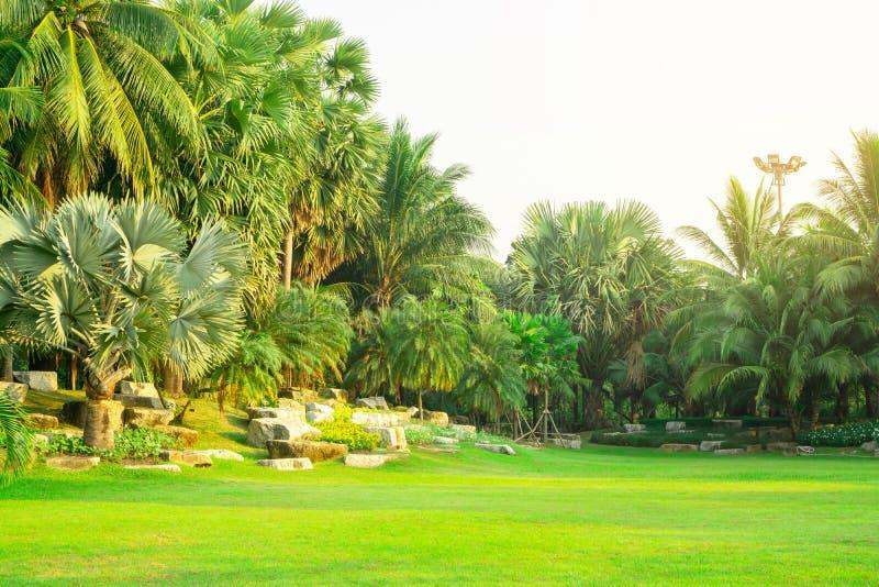 Den nya gröna gården för manila gräs, slät gräsmatta i härliga botaniska palmträd arbeta i trädgården, bra omsorglandskap i en al arkivbild