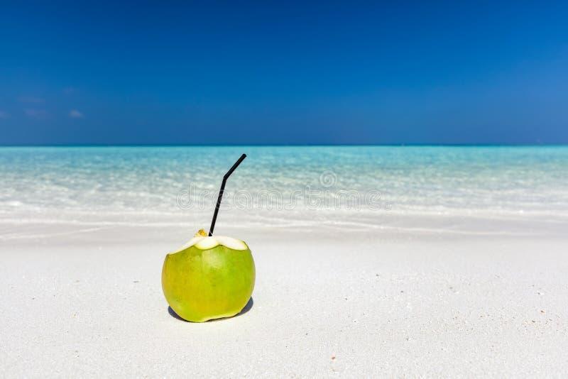 Den nya gröna kokosnöten, ordnar till för att dricka Tropisk strand i Maldiverna arkivbilder