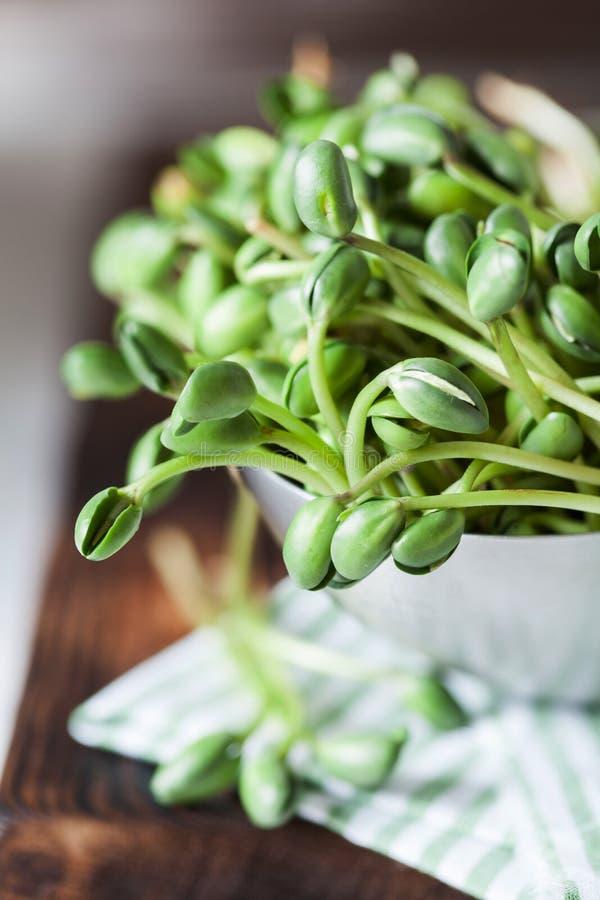Den nya gröna sojabönan spirar i metallbunke arkivfoton