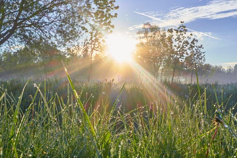Den nya morgonen med solstrålar och gräsdagg gryr träd arkivfoto